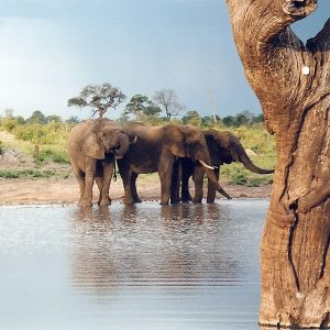 sudafrica Zimbabwek